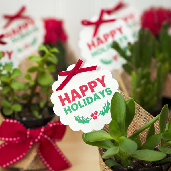 festive holiday round scalloped gift tag on succulent
